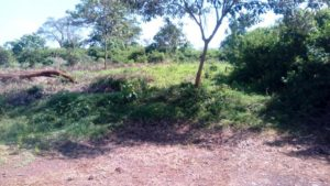 1/4 acre plots for sale – Nyeri