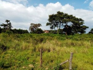 Twinmount Estate – 1/4 acre plots for sale in Nyeri