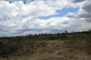 Amani Ridge –  1/4 Acre plots in Nanyuki