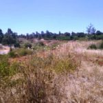 Splendour Ridge Development – 1/8 and 1/4 acre Plots on Sale in Kiambu