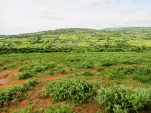 Kijani Hills – 1/8 acre Plots For Sale in Machakos