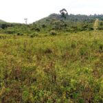 Western Hills – 1/8 acre Plots For Sale in Riat, Kisumu